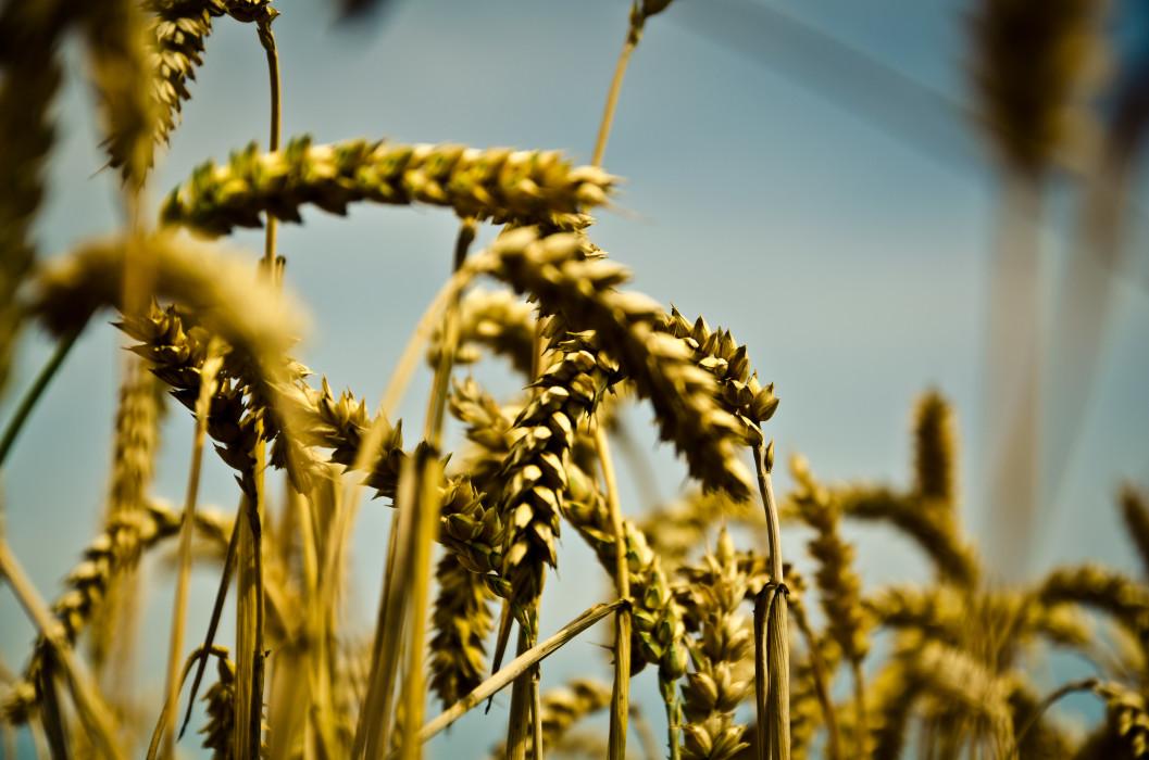 Bountiful Plant Pflanze Field Feld Summer Sommer Macro Makro