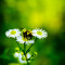 Burnout Bumblebee Hummel Plant Pflanze Flower Blume Insect Insekt Macro Makro