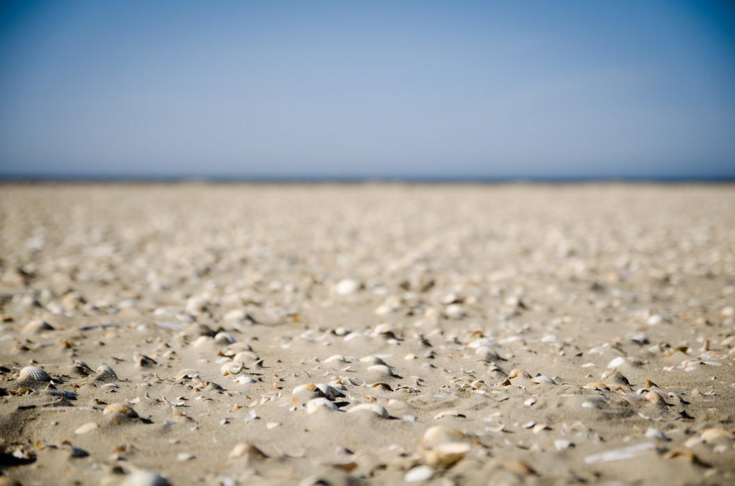 Crushed Rømø Beach Strand Shell MuschelSand Sea Meer