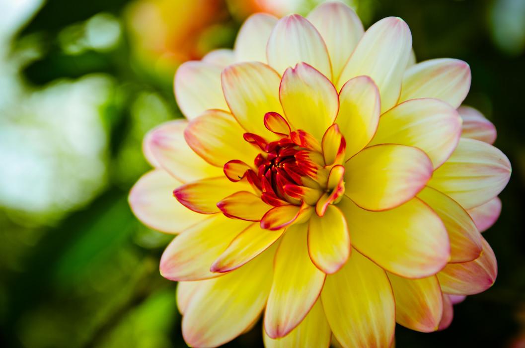 Gold Flower Blume Macro Makro