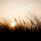 Grassroots Movement Fehmarn Sunset Sonnenuntergang Macro Makro