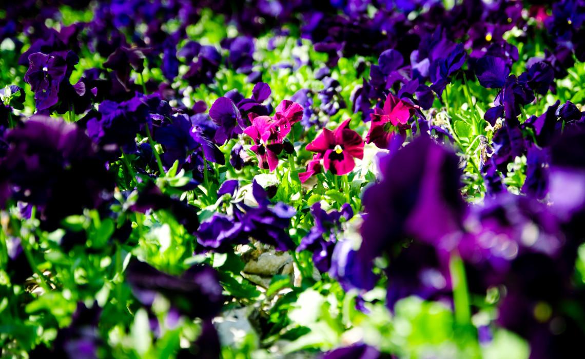 Misfits Botanical Garden Kiel Botanischer Garten Flower Blume