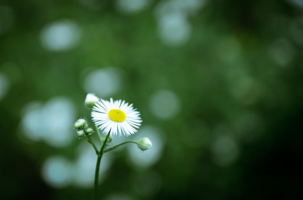 Yellow spot Plants Pflanzen Flower Blume Macro Makro Summer Sommer